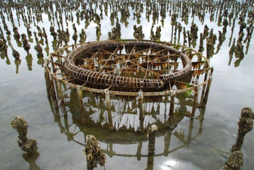 John Grade. Collector, 2007. Documentation shot of wooden sculptures after collecting debris from under Willapa Bay, WA.
